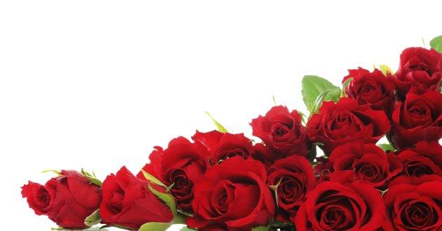 Roses Igloo Flowers Valentines