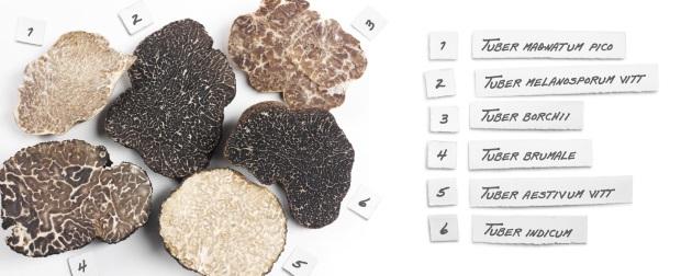 Truffles Types Tuber